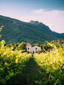 Une bastide provençale au milieu des vignes