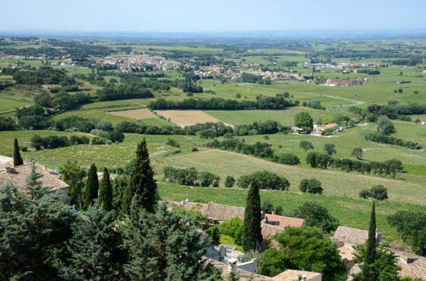 vignes-vignoble-paysage-rhone-alpes-seguret-tourisme-oenotourisme