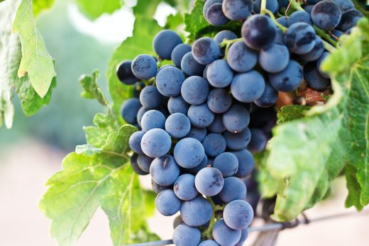 Vins Charente